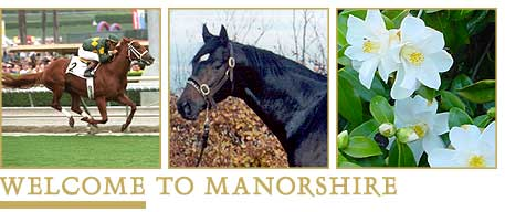 Welcome to Manorshire - Thoroughbred horse breeding establishment in Canterbury, New Zealand